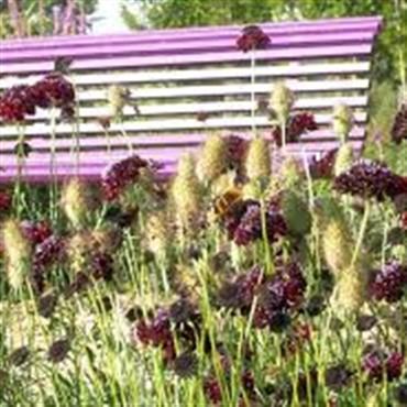 Sussex Prairie Gardens & Craft Fair