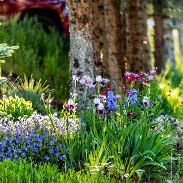 Savill Gardens & Cream Tea