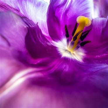 Flower Shows